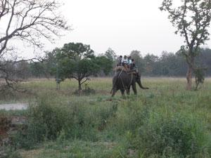 View of the Elephant Safari at Jim Corbett Park
