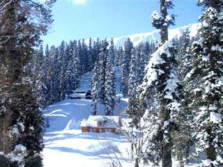 Snowcapped trees of Gulmarg
