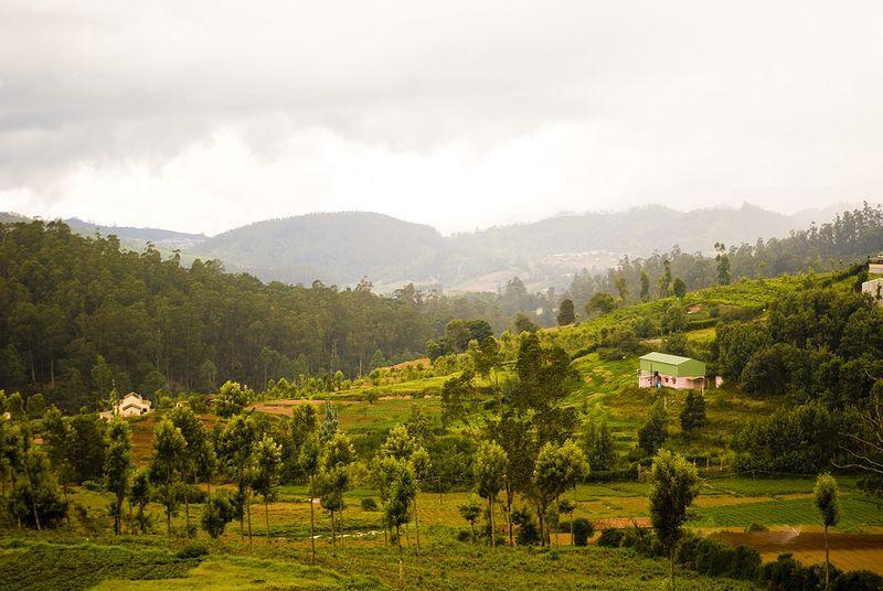 Nilgiris hills