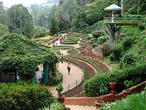 botanical garden_Ooty