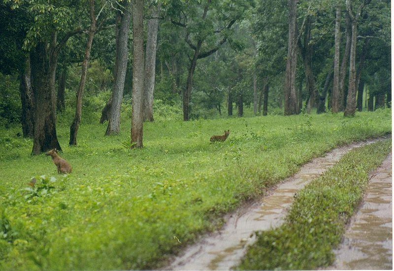 Nagarhole India  city images : flora and fauna in nagarhole national park flora nagarhole park